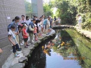 150808 メグミ船⑩淡水「水族館」②