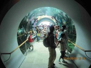 150808 メグミ船⑨淡水「水族館」