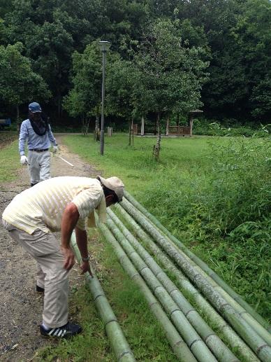 伐採したの竹の選別