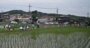 ④-5田んぼで生き物採取★