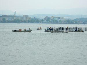 漁業体験2