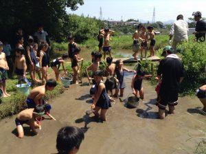 ビオトープ補修のお手伝い そこの泥をすくって深くします。
